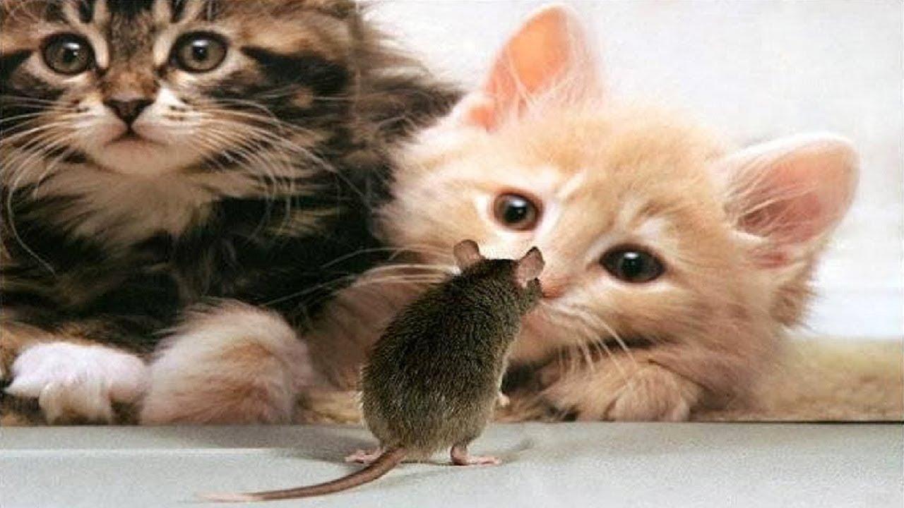 Poze cu pisici haioase - YouTube