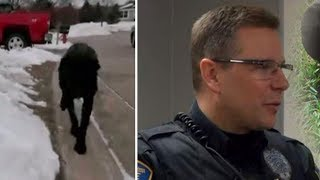 Stray Dog Tells Police Officer To Follow Him Home, Calls 911 When He Sees Balcony