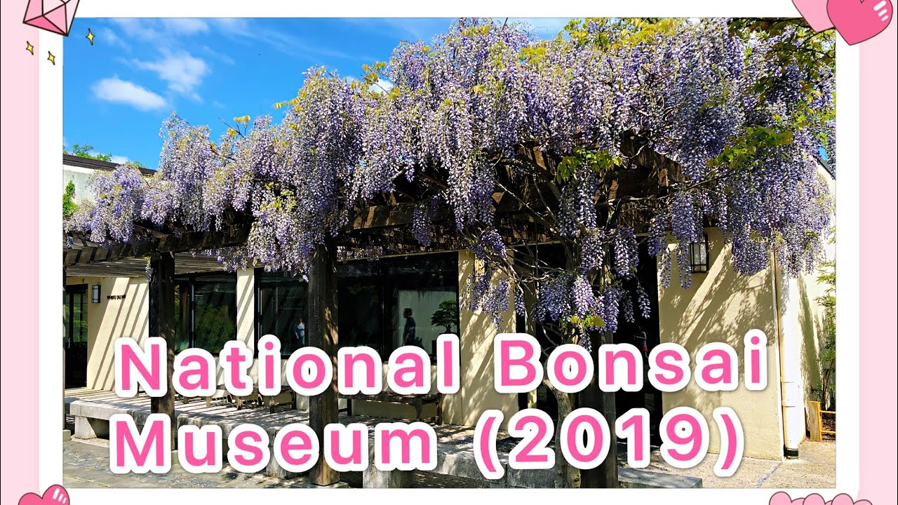 【Travel and Events】National Bonsai Museum at Washington DC ( April 2019)