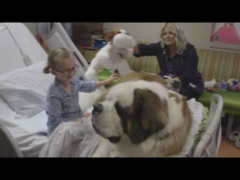 A Day in the Life of a Phoenix Children's Hospital Therapy Dog