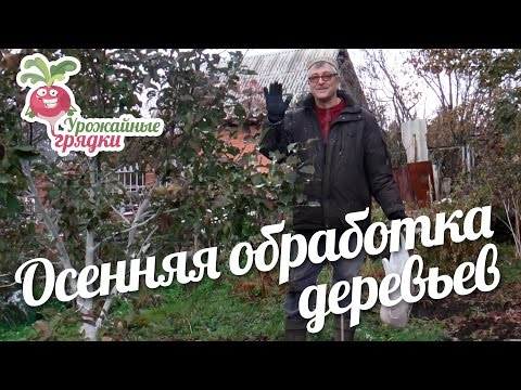 Мазь Вишневского при геморрое, как применять при лечении