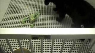 Meet Zazu A Spaniel, English Cocker Currently Available For Adoption At Petango.com! 3/2/2011 12:29: