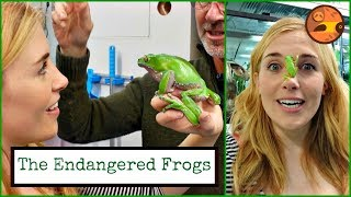 FROG ON MY FACE?! Maddie Meets the Endangered Frogs | Maddie Moate