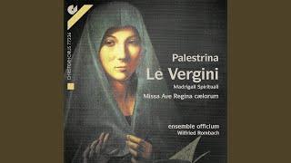 Missa Ave Regina coelorum: Kyrie