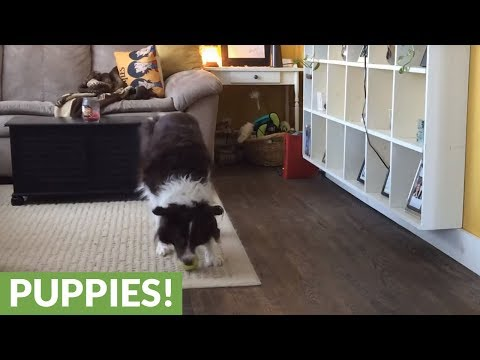dog-treats-squeaky-toy-like-musical-instrument