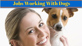 Jobs Working With Dogs - Dog Jobs