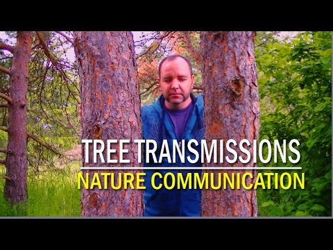 Tree Transmissions - Nature Communication