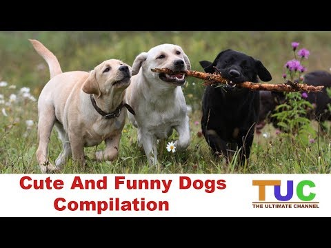 Cute And Funny Dogs Compilation | Dog Compilation | The Ultimate Channel