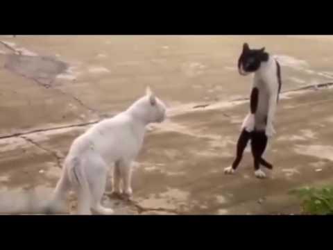 Kumpulan Video Viral Lucu
