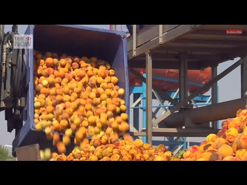 Financing Armenia's Peach Industry for Growth