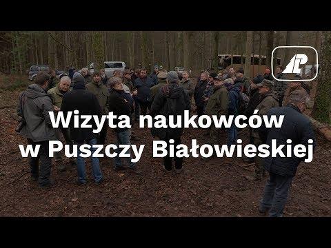 Wizyta naukowców w Puszczy Białowieskiej