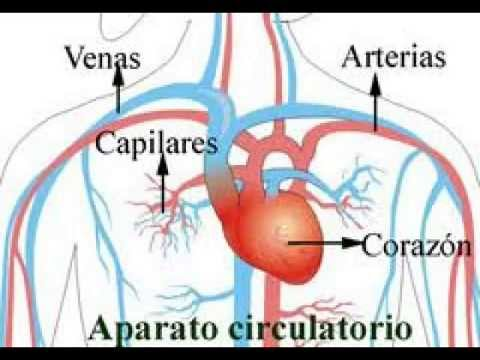 Arterias - YouTube