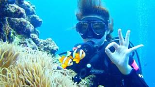 沖縄【かりゆしビーチ】 青の洞窟シュノーケル・体験ダイビング 体験ダ...