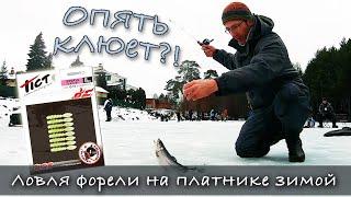 Попал на высадку десанта Ловля форели на платнике зимой Зимняя рыбалка 2021 Рыбалка на платнике