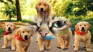 Фильм про собак и кошечек