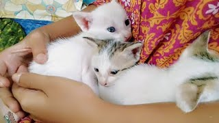 kitten video//cute baby cats//kittens//cute playing kittens//white kitties//name my kitten//funnycat