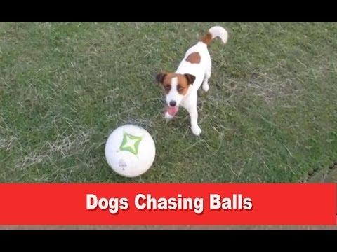 Dogs Chasing Balls