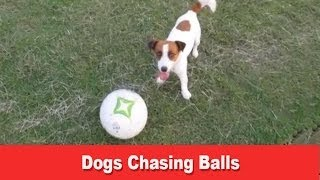 Dogs Chasing Balls