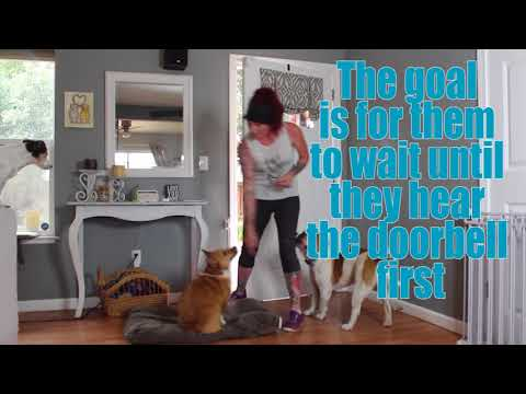 stop-your-dog-from-barking-at-the-door