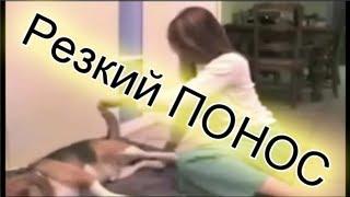 Видео приколы (Резкий ПОНОС)(Комментируй, оценивай, подписывайся если понравилось) Есть ВКонтакте, тогда загляни в группу http://vk.com/super_youtu..., 2013-05-09T08:14:08.000Z)