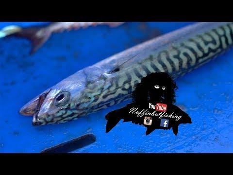 Episode 175 - Mackerel Fishing In Tenby - Nuffinbutfishing