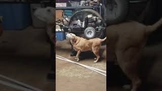 Thug Life Funniest Dog Video racing go karts Hood Fights Vine Comp