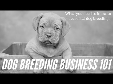 How To Become A Legit Dog Breeder (& Make Money) | VIP Puppies