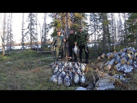 Охота на гуся 2016 Республика Коми
