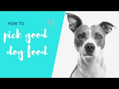 HOW TO PICK GOOD DOG FOOD (HOW TO READ DOG FOOD LABELS) // Veterinarian Dr. Lisa (2019)