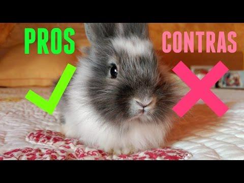 Pros y contras de tener un conejo