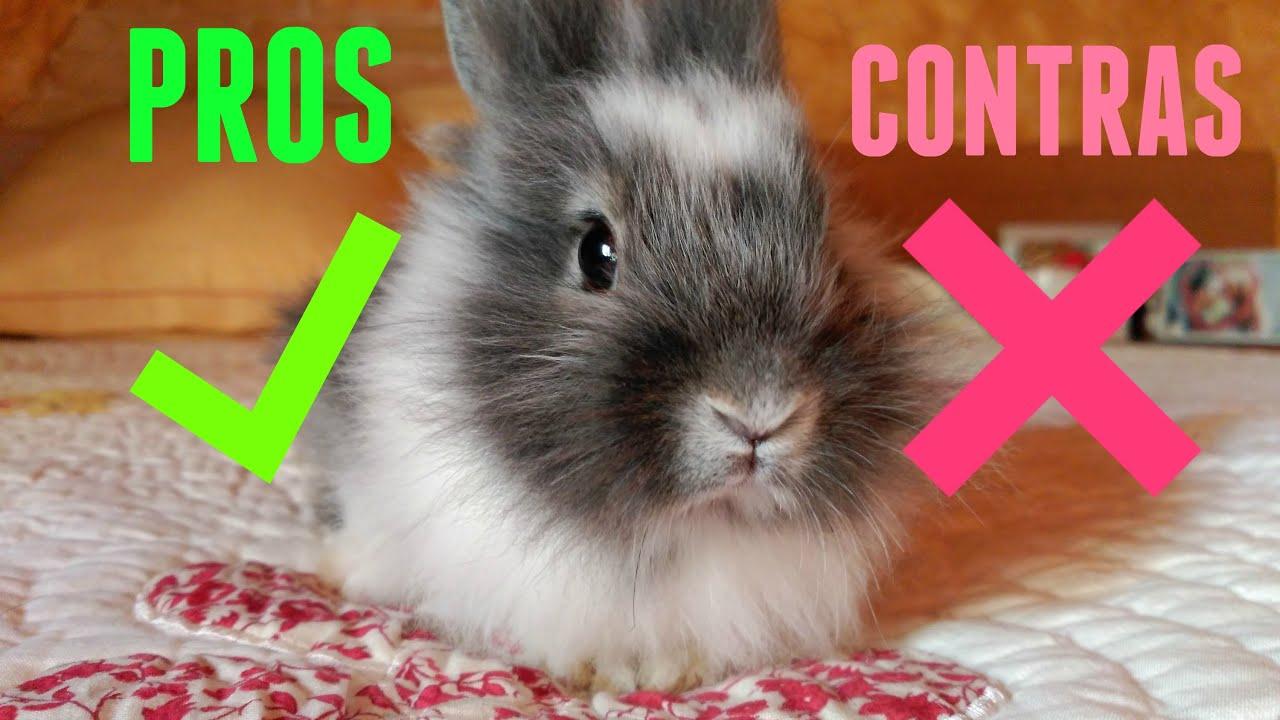 Pros y contras de tener un conejo youtube for Hormigon impreso pros y contras