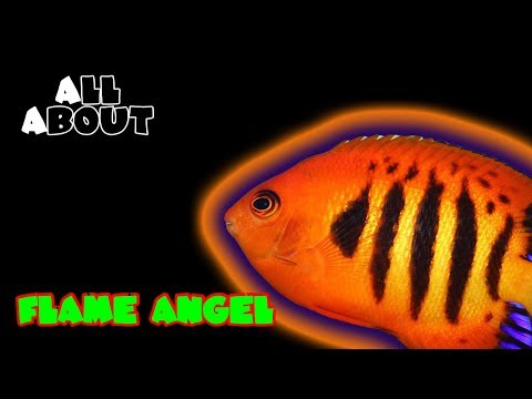 All About The Flame Angel