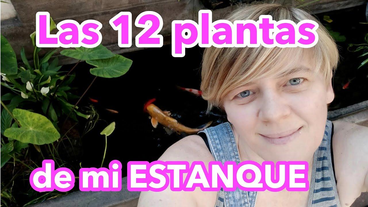 ❤️12 Plantas que tengo en mi Estanque