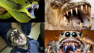 Najniebezpieczniejsze zwierzęta świata
