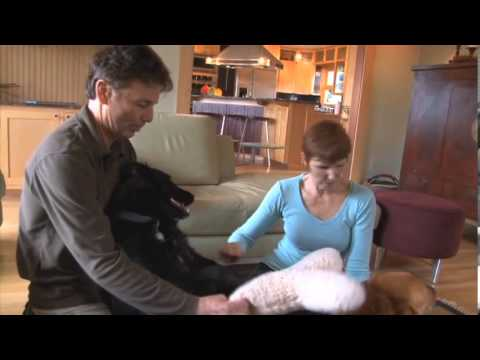 Medical and Behavioral Care, Treatment, and Rehabilitation at Humane Society Silicon Valley