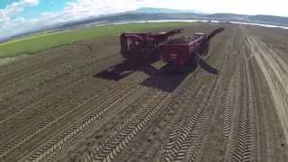 Spudnik 12 Row Sugar Beet Harvester and Crop Cart