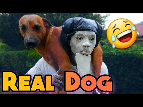 Real Dog [ Fry Irish Comedy ]