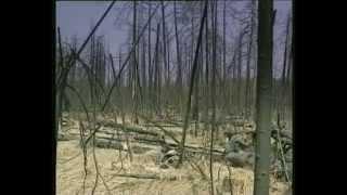 почему надо беречь лес?