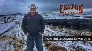 3 Ways to Breed Real World Cattle, NOT Paper Cattle