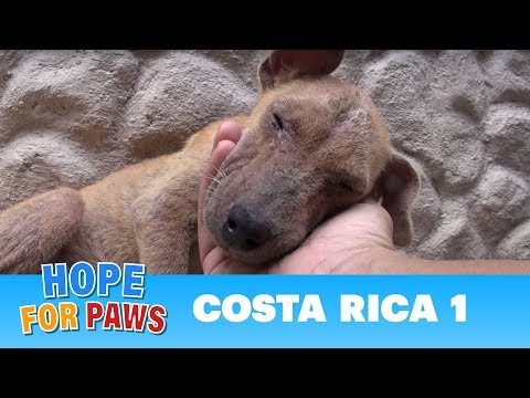 Hope For Paws dog rescue mission in Costa Rica!!!  Please share.
