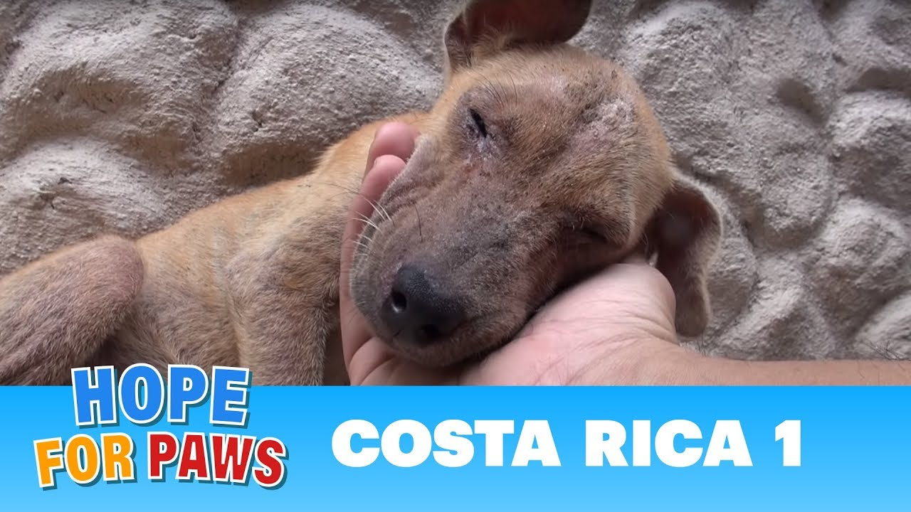 Hope For Paws dog rescue mission in Costa Rica!!! Please share