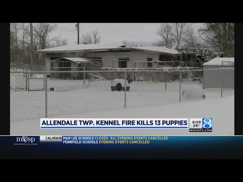Fire at Allendale Twp. kennel kills 13 puppies