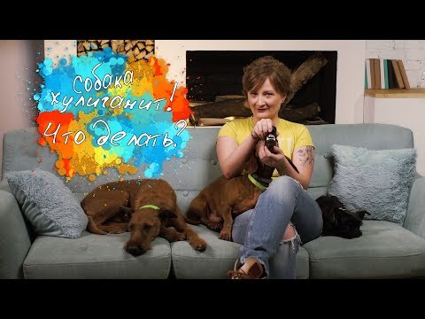 Как отучить собаку грызть диван