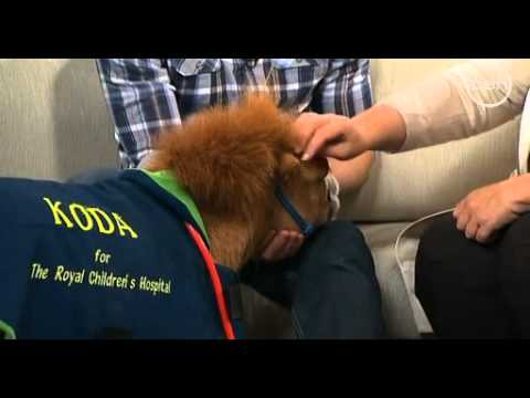 Koda the dwarf pony with Dr Chris Brown and The Circle