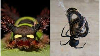 13 жутких фото животных с которыми лучше не встречаться / Другая сторона природы