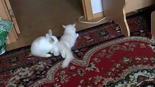 Кролик пежит кошку.mp4