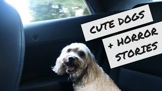 Cute Dogs + Horror Stories