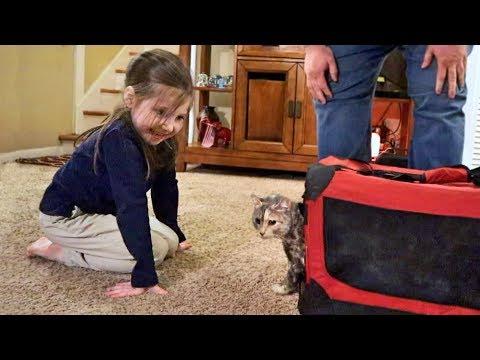Cute Homeless Kitten Update: Her New Forever Family