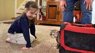 cute-homeless-kitten-update-her-new-forever-family