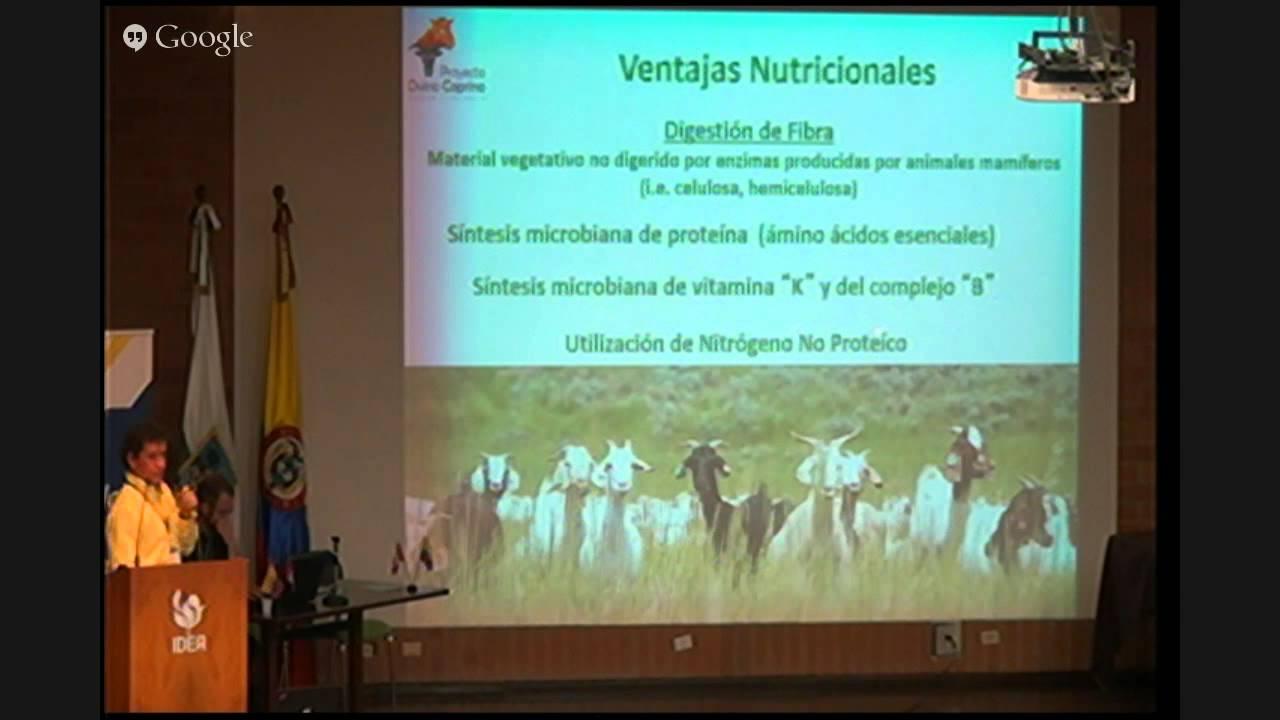 Anatomía digestiva de ovejas y cabras, Trópico Medio. - YouTube